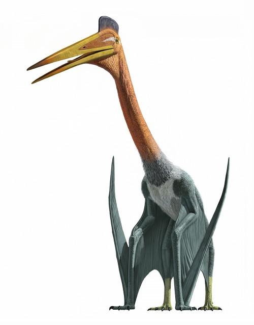 Quetzalcoatlus northopi