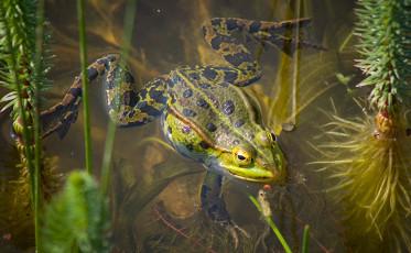 feature_cool job_amphibian biologist
