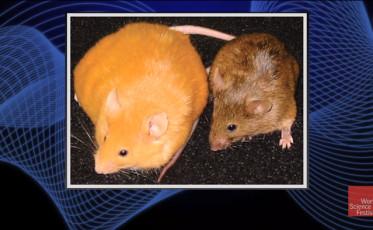 of_mice_and_men_a_breakthrough_study_in_epigenetics