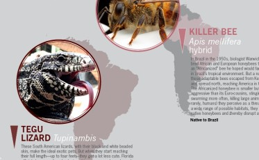 Invasive_Species_Infographic_