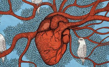 heart feature