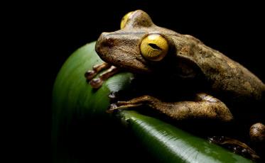feat_amphibians_getty_139011062
