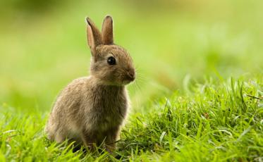 feat_bunny_000009439601