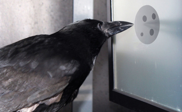 countingcrow
